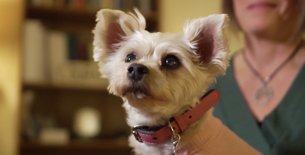 Pearl the therapy dog - New Day Counseling